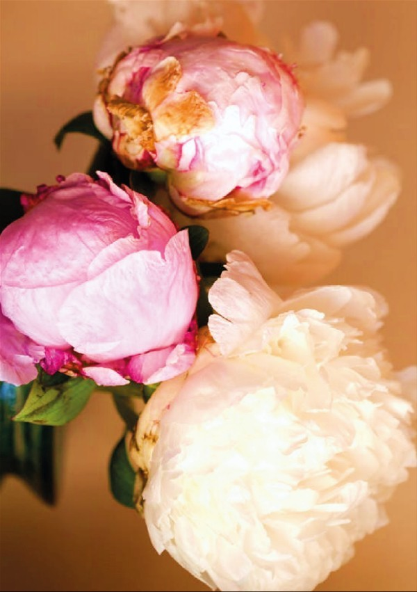 peony for skin care